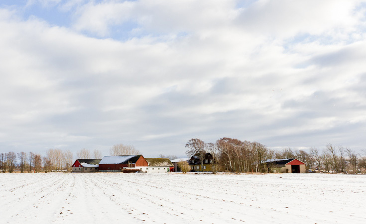 The Slattarod Farm in Cape Bjare where the Gammel Svensk Rod potatoes are grown.